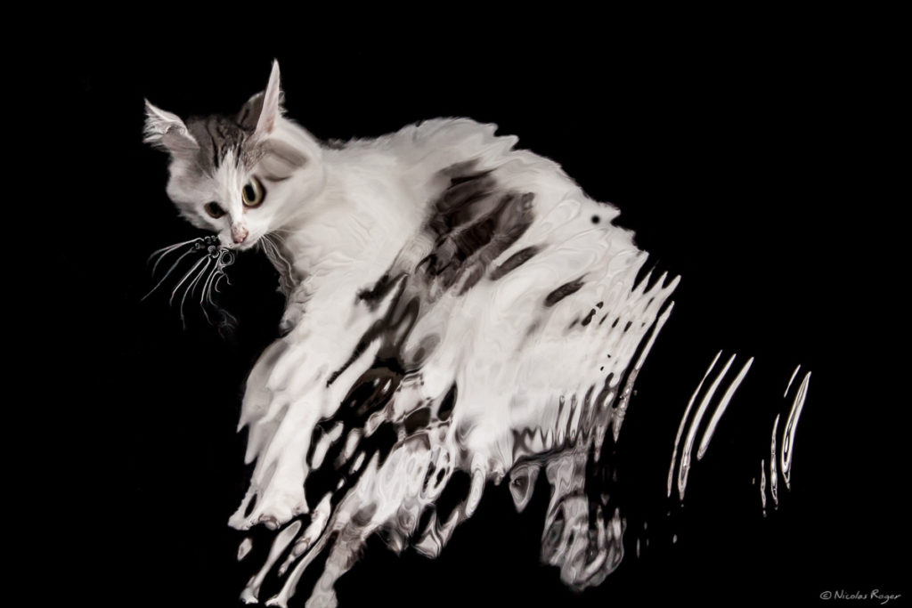 artiste-photographe-chat-auvergne